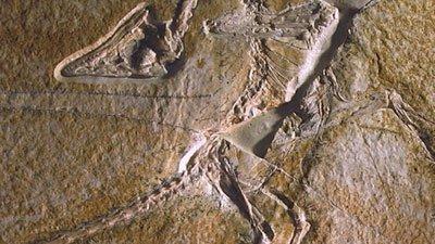 Crash Landing for Archaeopteryx?