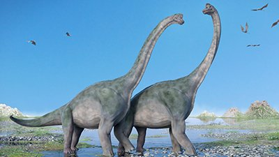 Did Sauropods Walk on Two Legs?