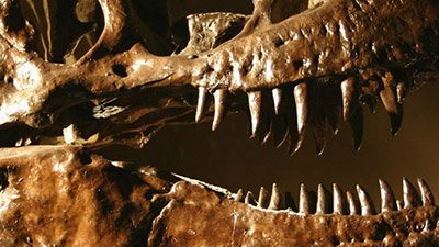 Preservation of Dinosaur Protein Fragments Flies in the Face of Evolution's Millions-of-Years