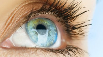 Eyelids—Intermittent Wipers