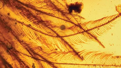 Did a Dinosaur Get Its Feathered Tail Caught in Amber?