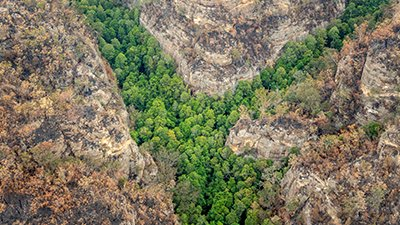 Firefighters Save Trees That Outlived the Dinosaurs . . . But Was That Millions of Years Ago?