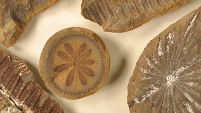 Five Fossil Mysteries . . .