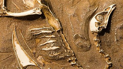 Fossil Bird Uncovered with Unlaid Egg Inside
