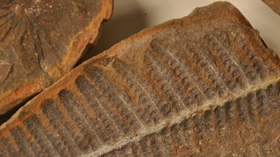 Four: Amazingly Preserved Leaves