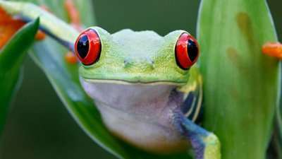 Super-Sticky Spit: How a Frog Gets a Meal