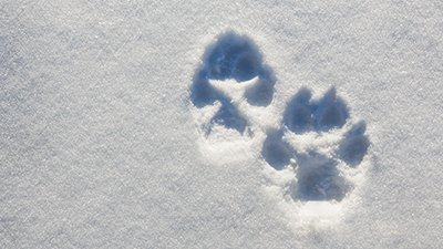 Frozen Puppy, Dog, Wolf, or Something in Between?