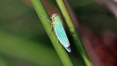 God's Design in Creation: Water Strider Legs and Leafhopper Eggs