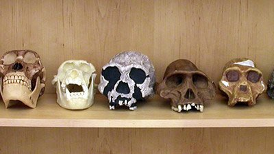 "Reply to ""Taxon Sample in Hominin Baraminology: A Response to O'Micks"""