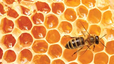 Honeybees: One of God's Sweetest Designs