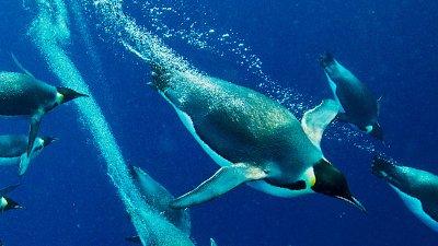 Underwater Flight