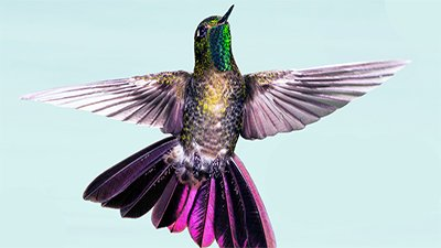 Hummingbirds—Fantastic . . . from Head to Tail