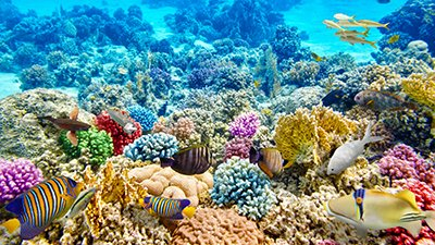 How Long Does It Take for a Coral Reef to Grow?