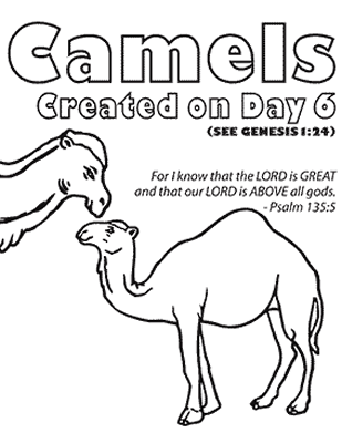 zoo camel coloring