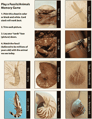 Living Fossils Memory Game