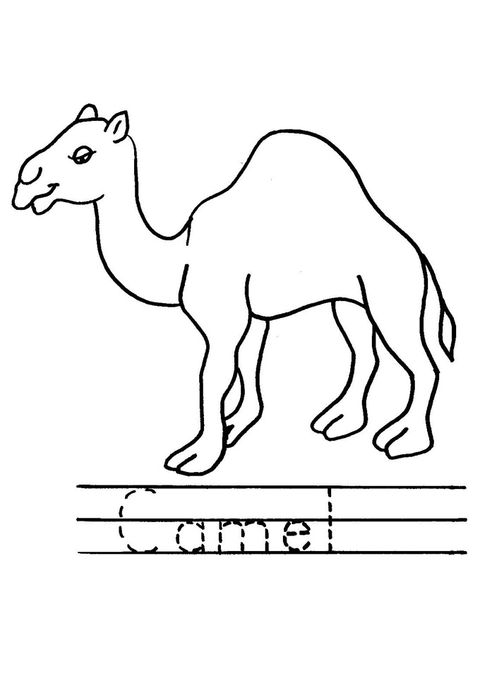 Color the Camel