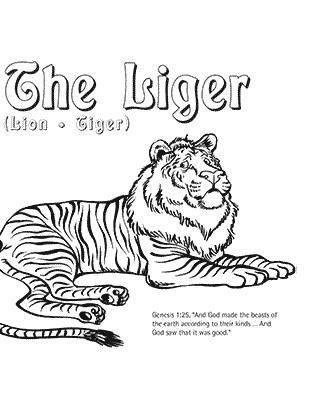Liger Coloring