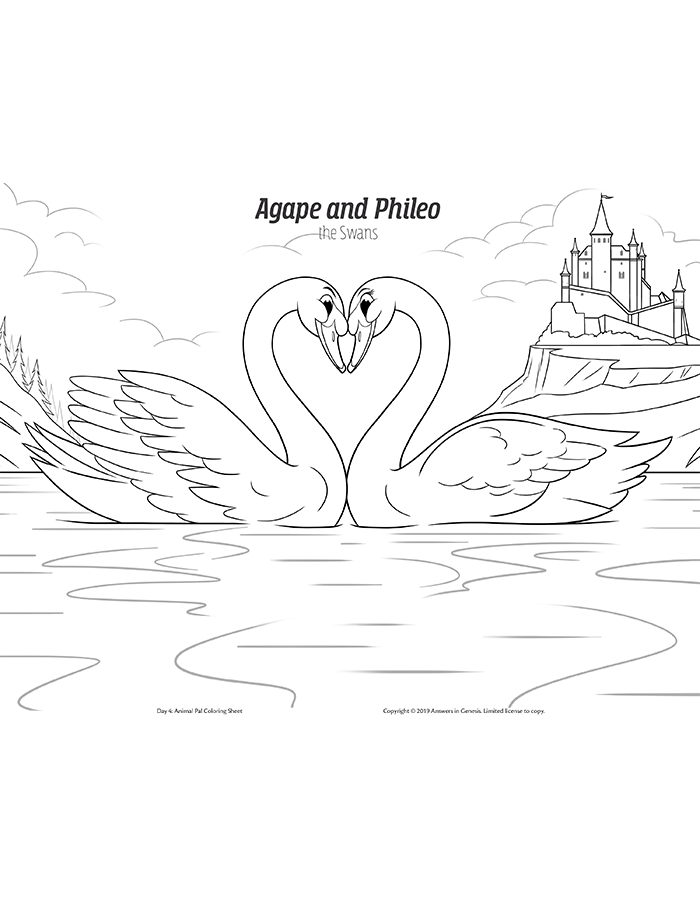 Agape and Phileo the Polish Mute Swans