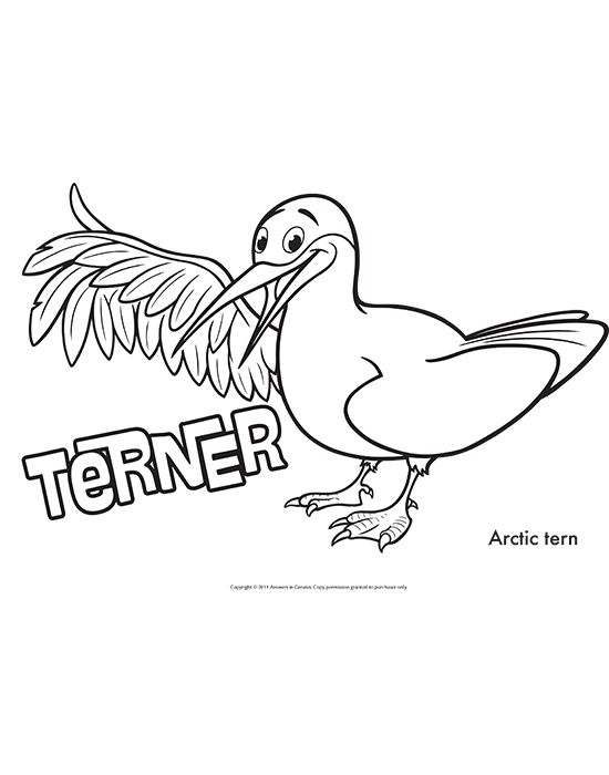 Terner Coloring