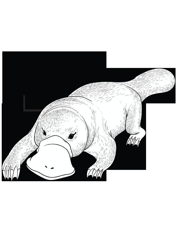 Platypus Coloring