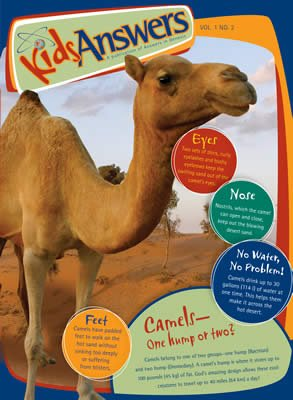 The Camel—One Hump or Two?