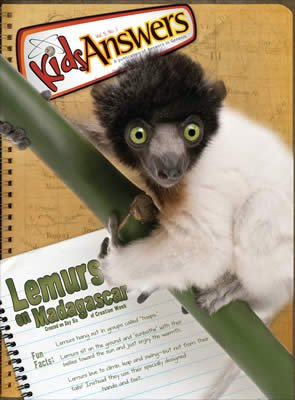 Lemurs on Madagascar
