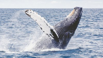 "Whale ""Evolution""?"