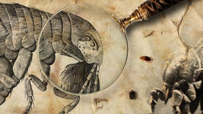 The Origin of Fleas and the Genesis of Plague