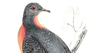 Passenger Pigeon Extinct: Remembrance Day for Lost Species