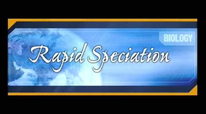 Rapid Speciation
