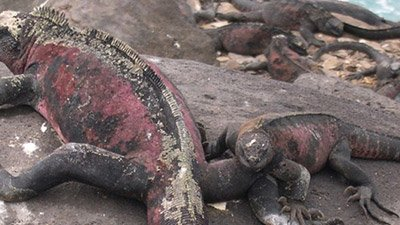 Salt Sneezing Lizards