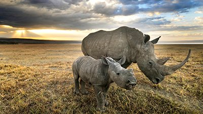 Should Christians Save the Rhinos?