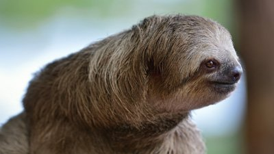 Sloths: Slow on Purpose
