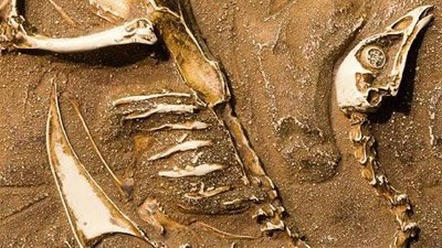 ¿Dónde están todos los fósiles humanos?