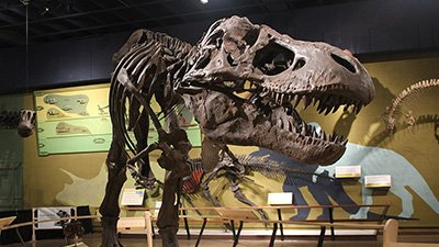T. Rex Revisited: Fast, Slow, or Pack Hunter?