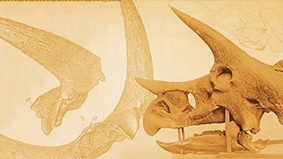 Hell Creek Formation Tells a Tale of Triceratops