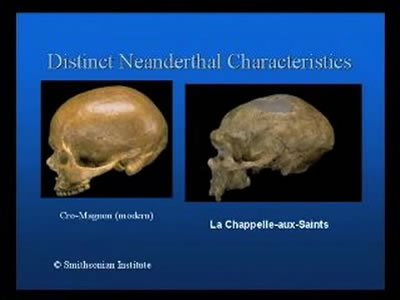 Did Neanderthals and Modern Humans Share a Common Gene Pool?