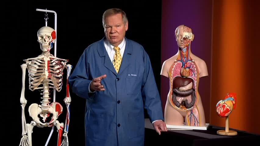 Vestigial Organs—Evidence for Evolution?
