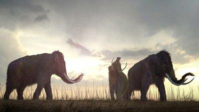 Why Bring Back Extinct Species?
