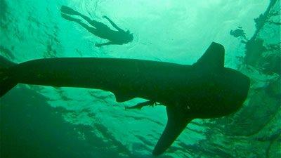 A Whale Shark Encounter