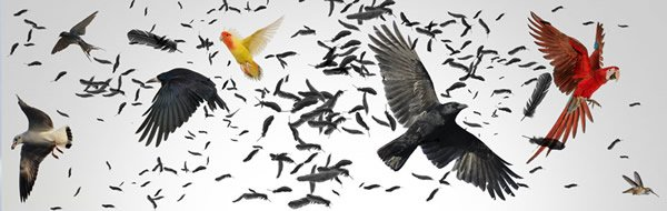 The Big Bang of Bird Evolution?