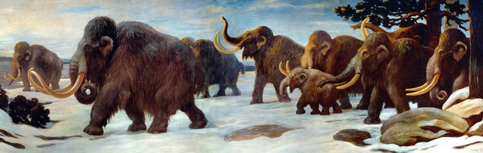Mystery Mammoth Points to a Global Flood and Ice Age