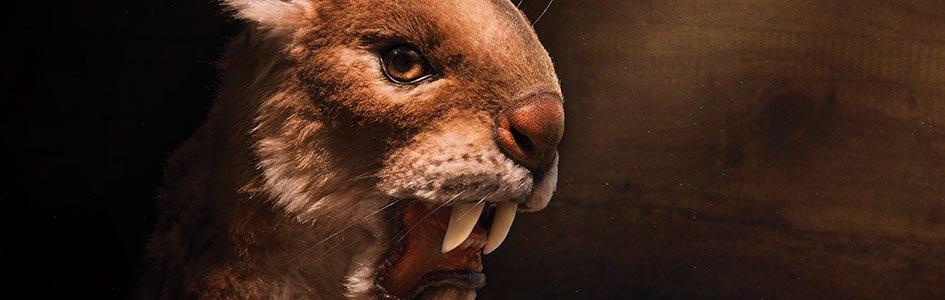 Reimagining Ark Animals
