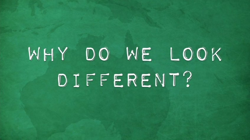 Why Do We Look Different?