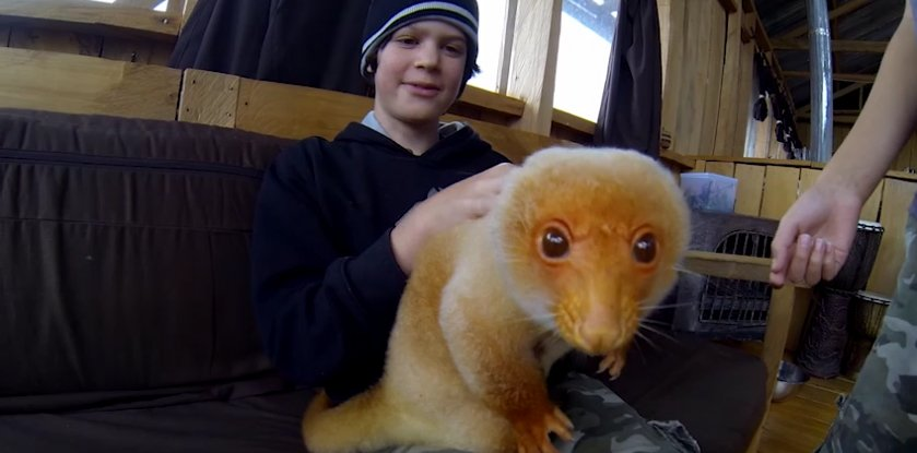 The Wild Brothers with Newt, the Cuscus