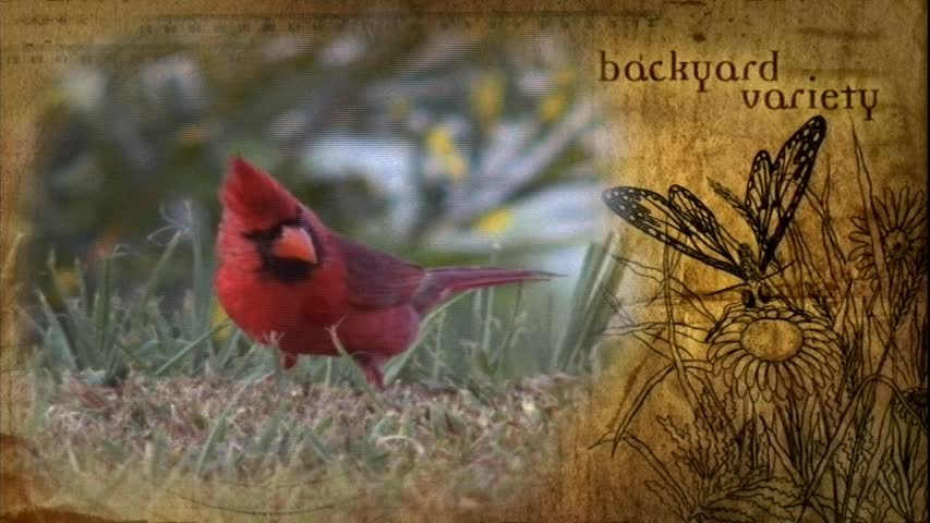 Creation Museum Collection: Life: Backyard Variety