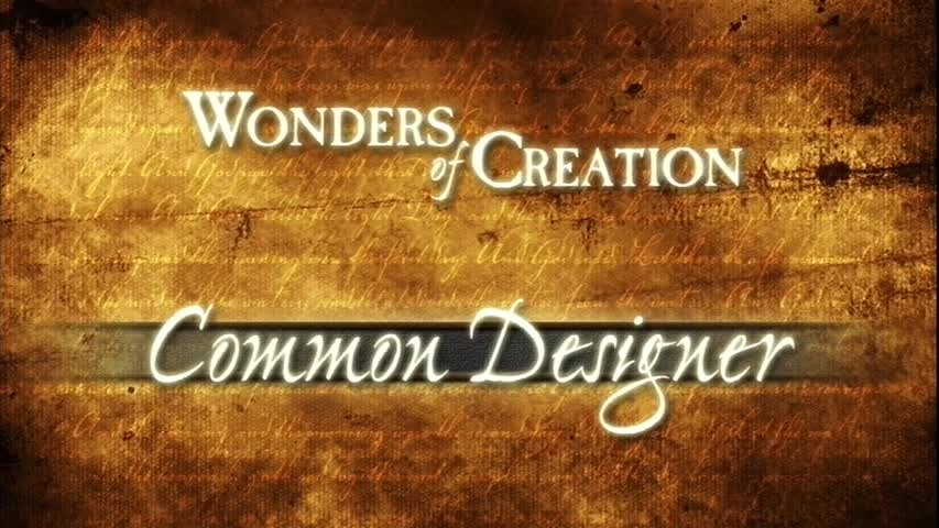 Creation Museum Collection: Life: Common Designer