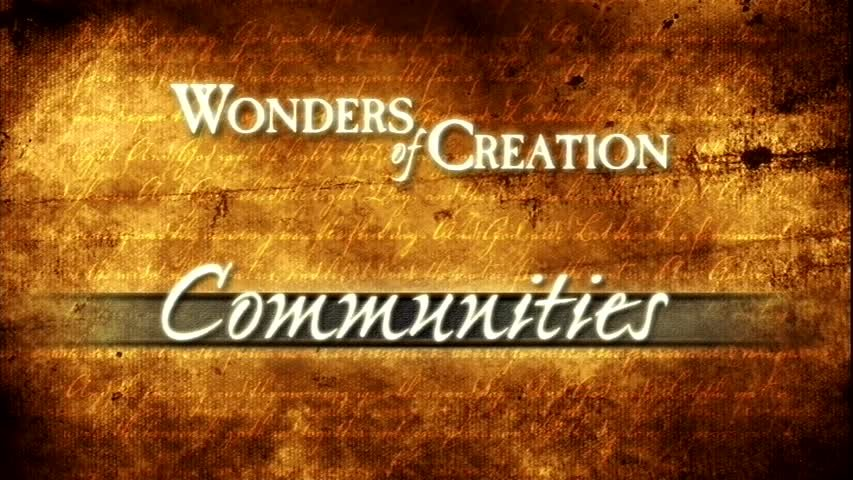 Creation Museum Collection: Life: Communities