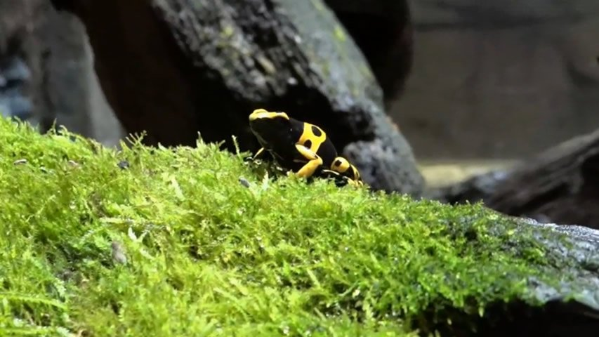 Creation Museum: Poison Dart Frogs