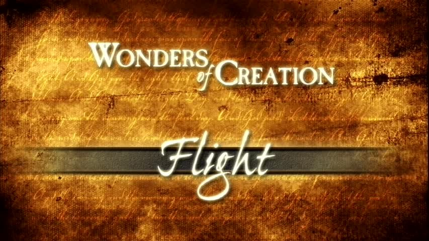 Creation Museum Collection: Life: Designed for Flight